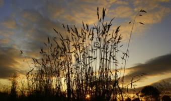 Eddy Smith - Sunrise On The Marsh