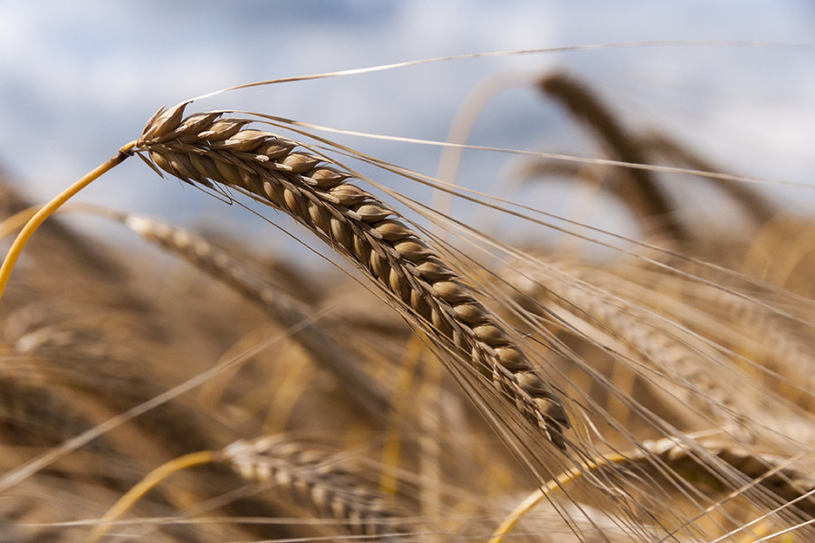 Ian Nicholls - Harvest Time
