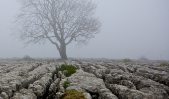 Limestone Pavement  by Sue Eckersly