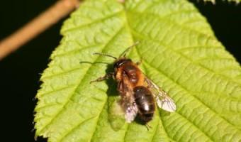 Geoff - Wasp