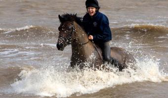 Fun in the Sea by Sue Eckersley