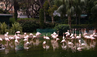 Ken Trace - Flamingos