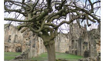 Simon Curotto - StrangeTree Kirkstall Abbey