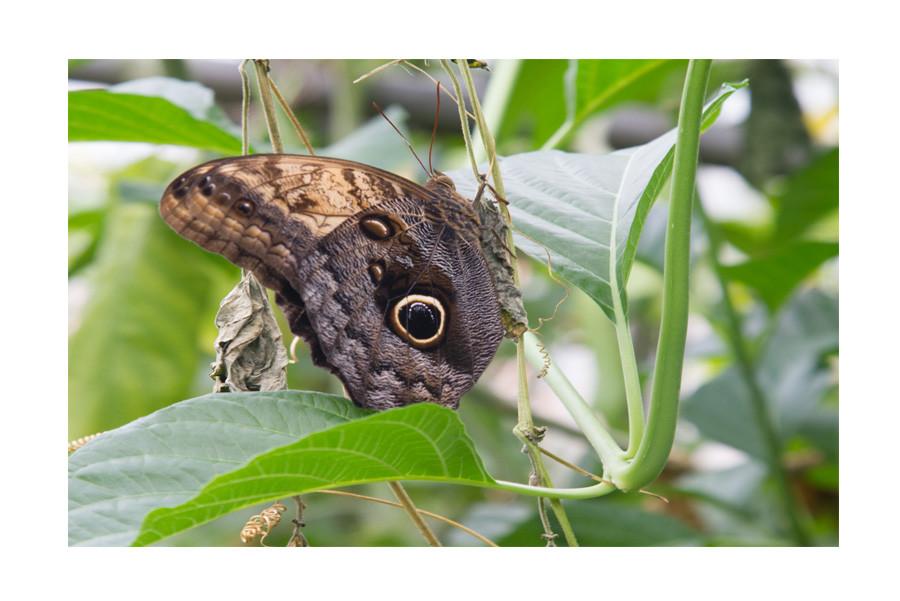 Ian Gill - Butterfly