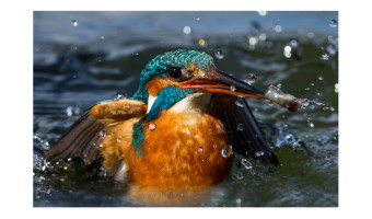 Splash & Grab
