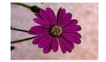Dick Townend - purple-flower