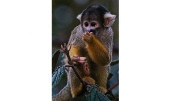 2nd Monkey by David Walker