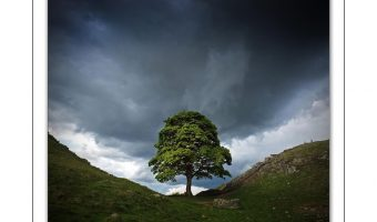 Pictorial - Sycamore Gap by John Richardson