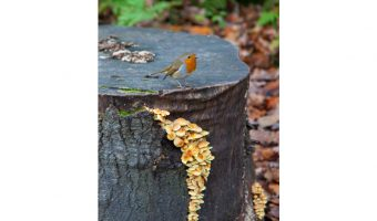 Robin & Fungi