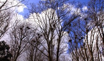 Ken Trace - Suffolk Rookery