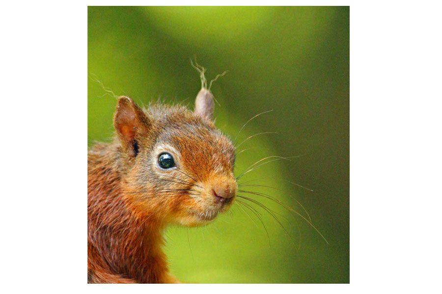 Bev Spooner - Baby squirrel