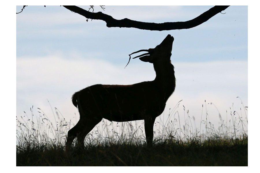 Bev Spooner - Deer silhouette