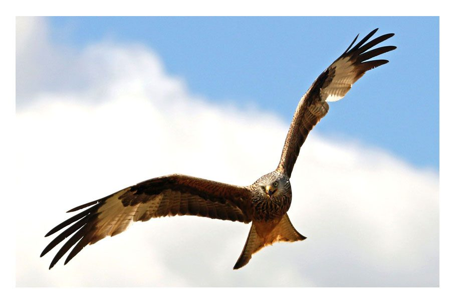Bev Spooner - High as a kite