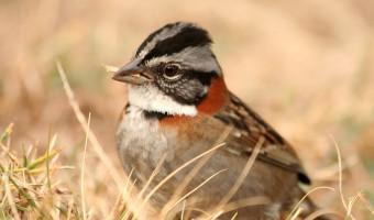 Nesting by Wendy Harvey