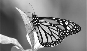 Butterfly Wendy Harvey