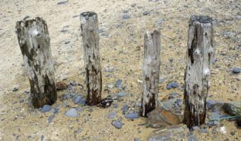 Peter Chittock - The Beach