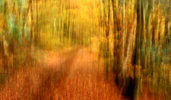 Woodland Path  by Wendy Harvey