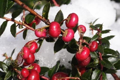 Geoff Spink - Berries