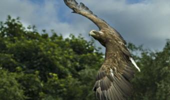 David Walker - Eagle