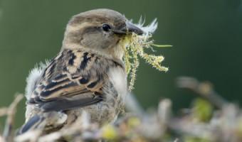 Sparrow by David Walker