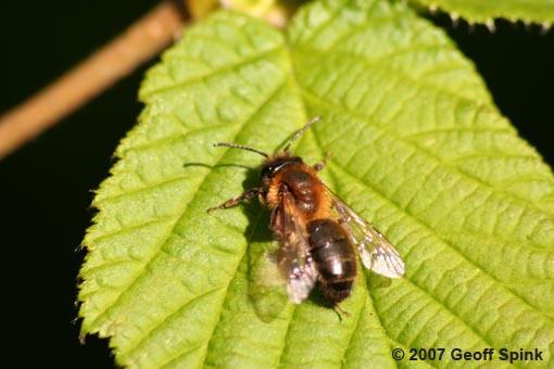 Geoff Spink - Wasp
