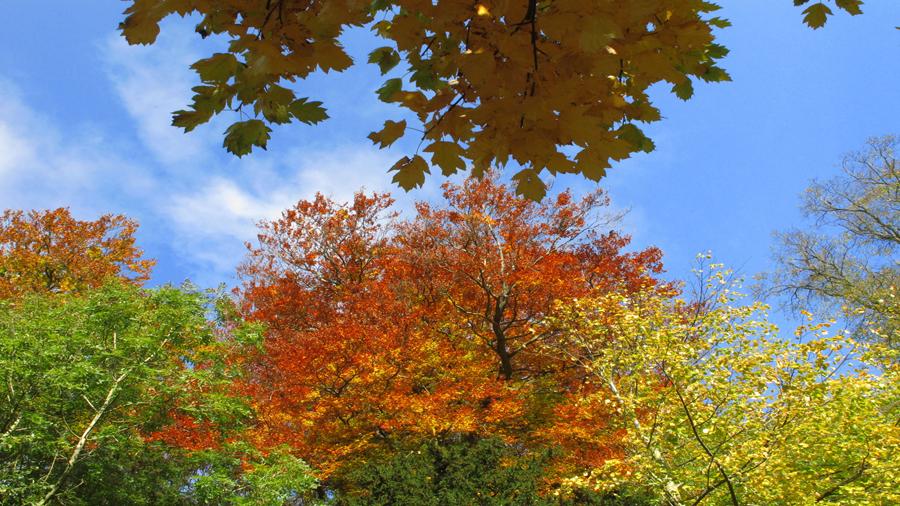 Keith Brown - Autumn colours