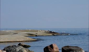 Ulla Mercer - Seagulls at rest