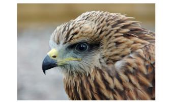 Runner up Bird of Prey by Moira Foster