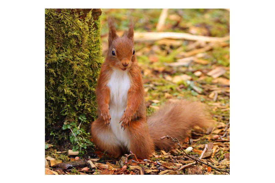 Bev Spooner - Posing squirrel