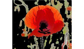 Poppy Poster Joint 3rd by John Richardson