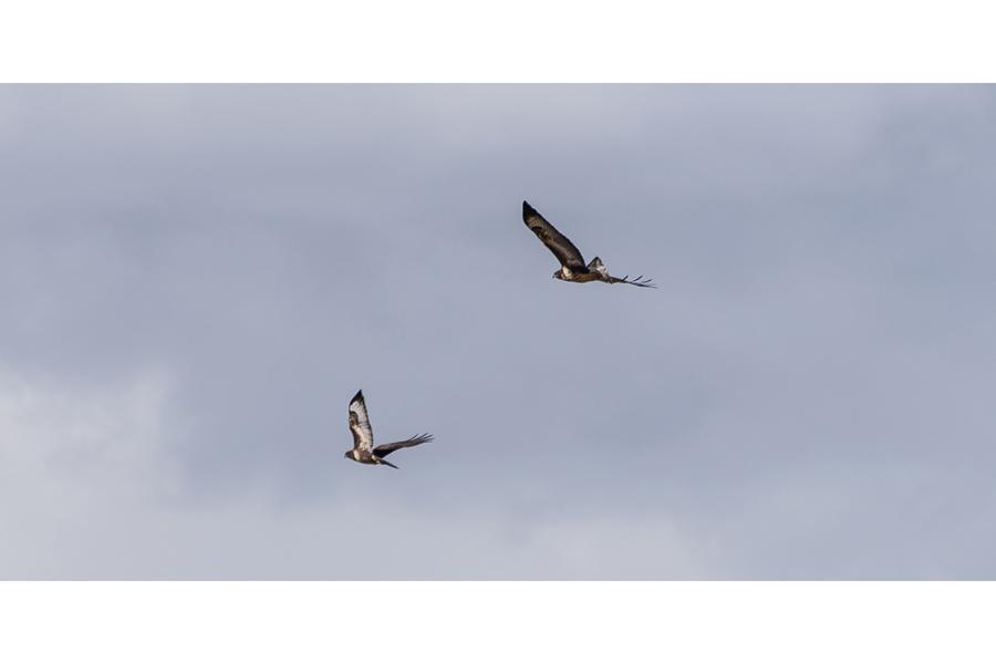Bruce Clegg - Buzzards Circulating