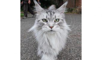 Bruce Clegg - Cat