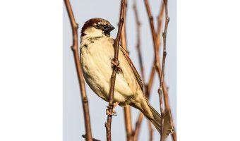 Bruce Clegg - Sparrow